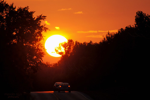 road trees sunset summer sun silhouette golden evening tones thegalaxy