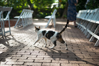 Ernest Hemingway's Cats | by Michael Braverman