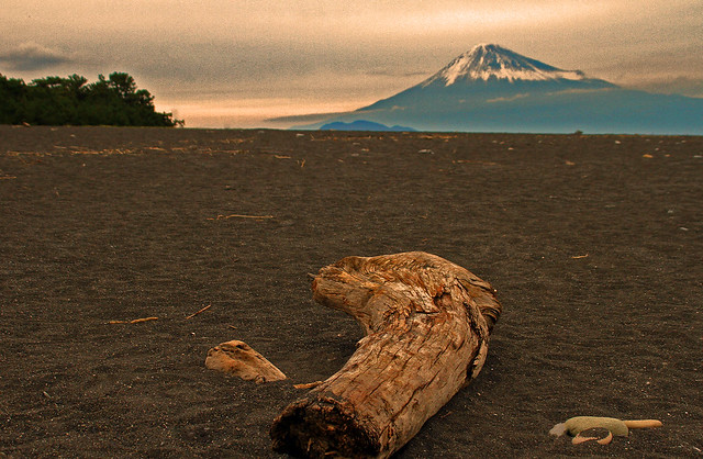 Mt Fuji and drifted woods:Mt,Fuji (Unesco's World cultural heritage)