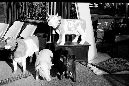 La vache Milka se fait des amis | by Bokey Shutter