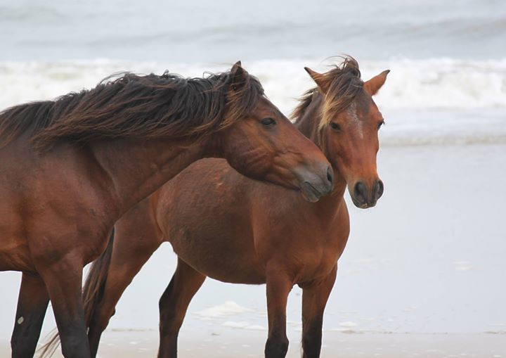 Fc Corolla Outback Adventure Wild Horse Photo Provided B Flickr