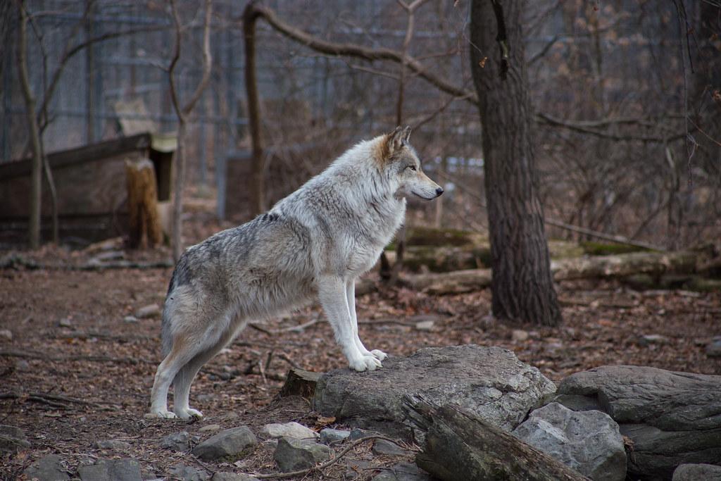 Lakota Wolf Preserve-3208