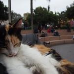 Fr, 25.09.15 - 13:43 - Parque Kennedy, Miraflores