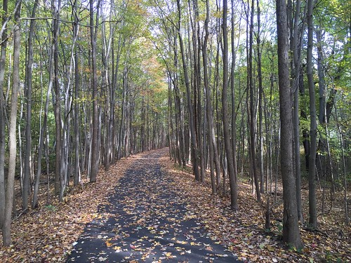woods path leaves fall autumn walking