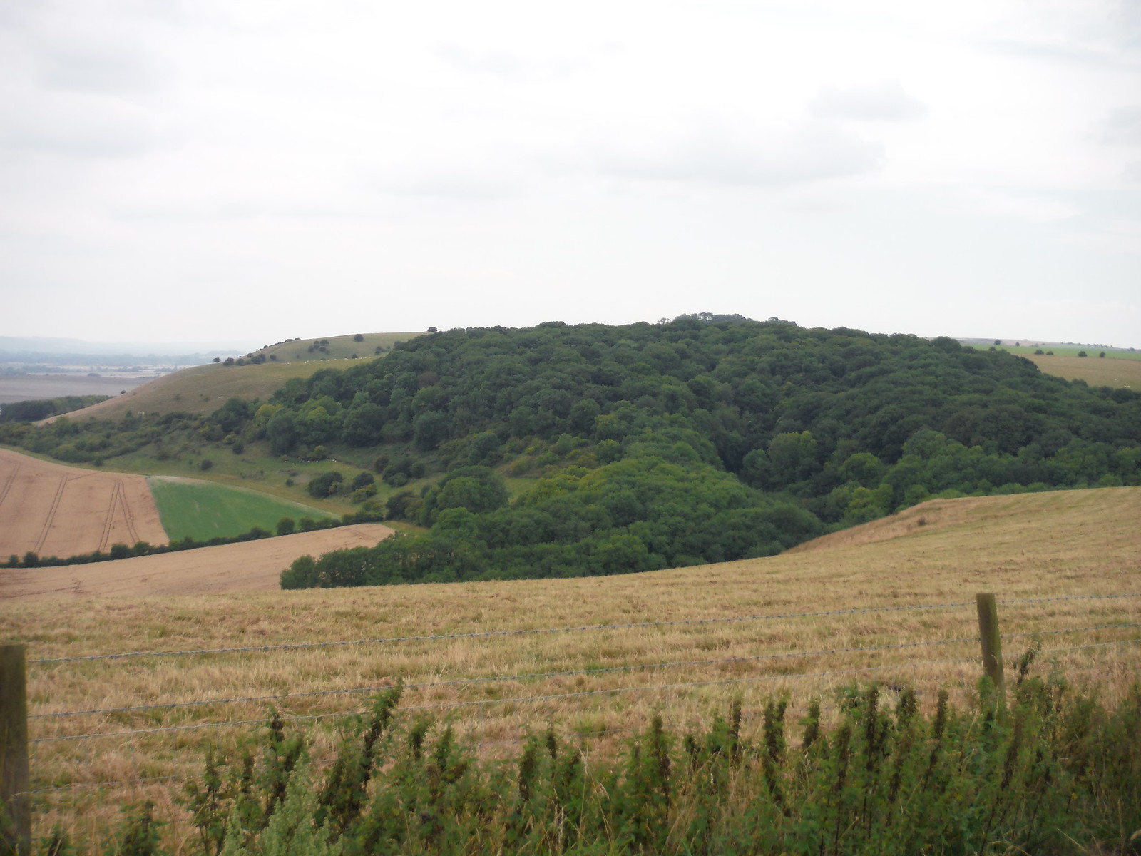 Gopher Wood from Huish Down SWC Walk 255 Pewsey or Marlborough Circular via Avebury
