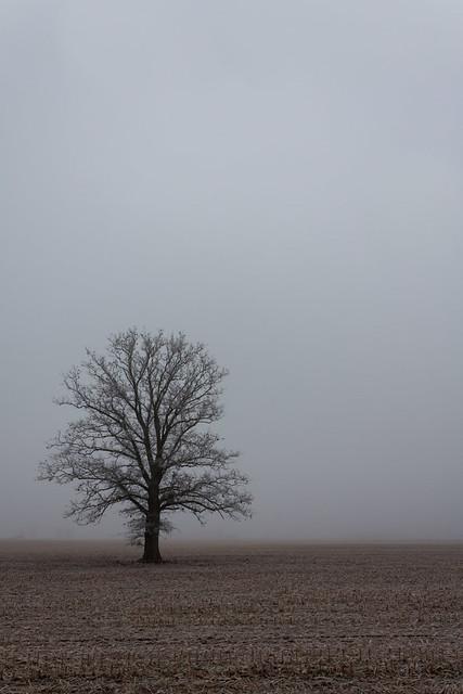 Yesterday's Fog