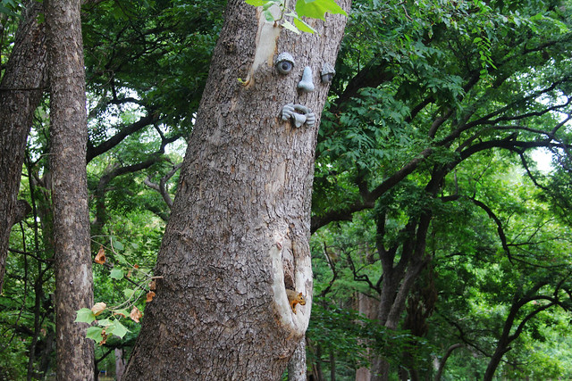 Squirrel and Face, Wimberley