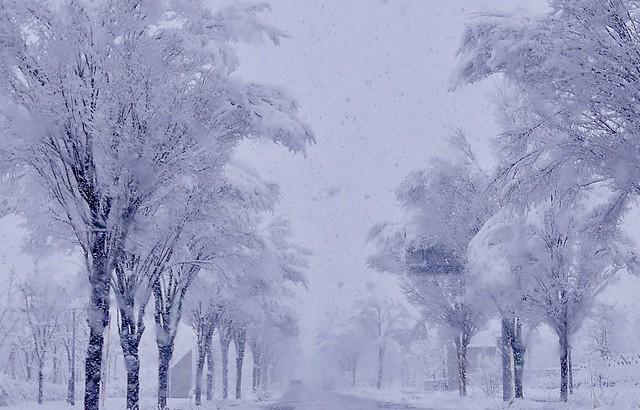 Winter Scene @ Urasa #3