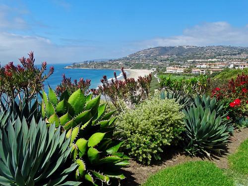 california beaches usa landscape ritzcarltonhotel saltcreekbeach skyandclouds dgrahamphoto flowers sandandsurf beachlife ocean sea surf beachhomes watercolor cactus succulents cloudsandsky