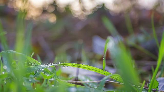 Jewels in nature II