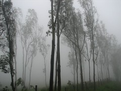 fog and wind....going through the trees | by Inchara