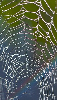 Spider Web | by srgurr