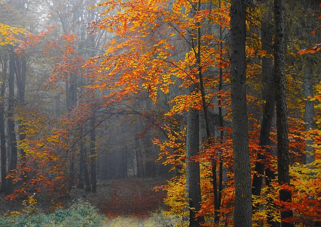 Herbst im Serrahn