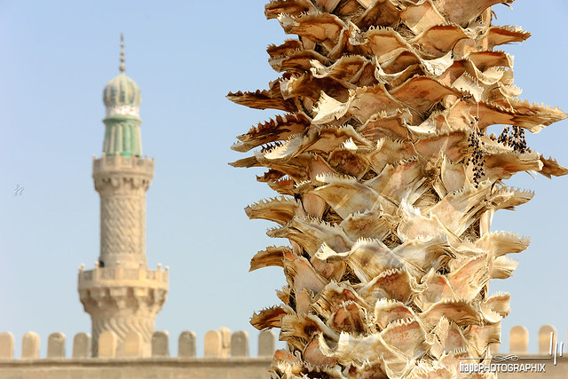 Palm trunk with Minaret
