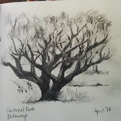 #zimbabwe #bulawayo #park #tree #sketch #guardiantravelsnaps  The label on the drawing is the attempt of a man who stood watching me to spell 'Centenary'. Bless him :)