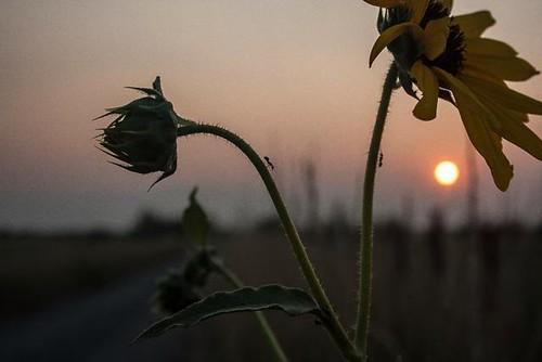 flowers sunset utah ants stansburypark
