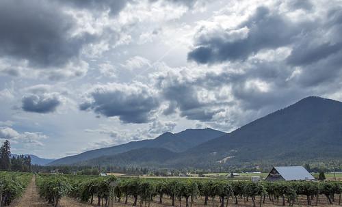 jacksonville oregon dark clouds cloudy storm rain clearing between storms nikon d750 nikkor 24120mm f4g afs ed lens vr ruch grapes vineyard harvest season al case