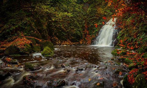 autumn ireland red green fall river gold stream
