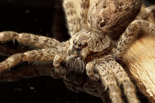 Dock Spider | by Sean McCann (ibycter.com)