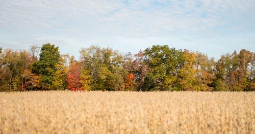 autumn trees fall rural october pentax pennsylvania farm harvest foliage pa mcconnellsmill k5ii pentaxk5ii