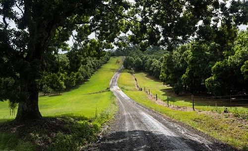 road dirtroad macadamias crowsash shade wetroad dunoon landscape australianlandscape ruralaustralia northernrivers nsw australia munroroad