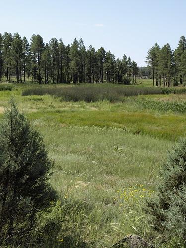 arizona whitemountains bigsprings pinetop pinetoplakeside pinetoparizona bigspringsenvironmentalstudyarea earthnaturelife