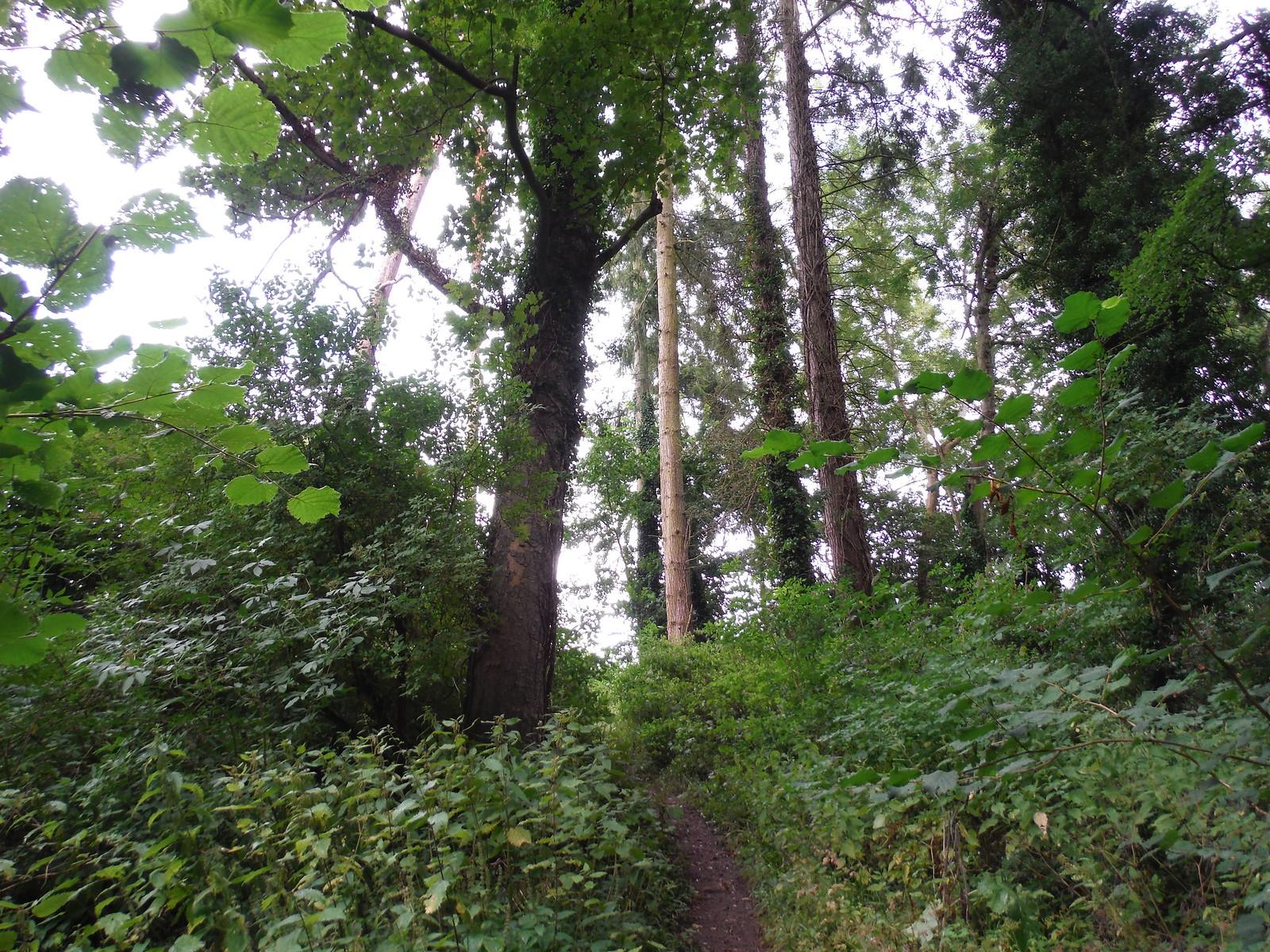Steep Narrow Path up from Fonthill Lake SWC Walk 248 Tisbury Circular via Hindon