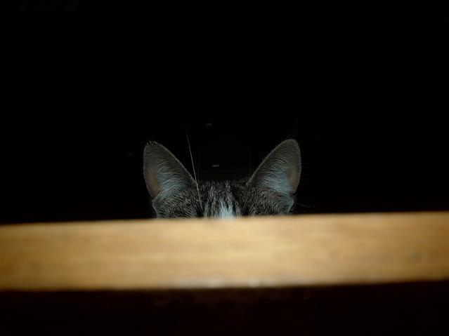 schüchtern Katze