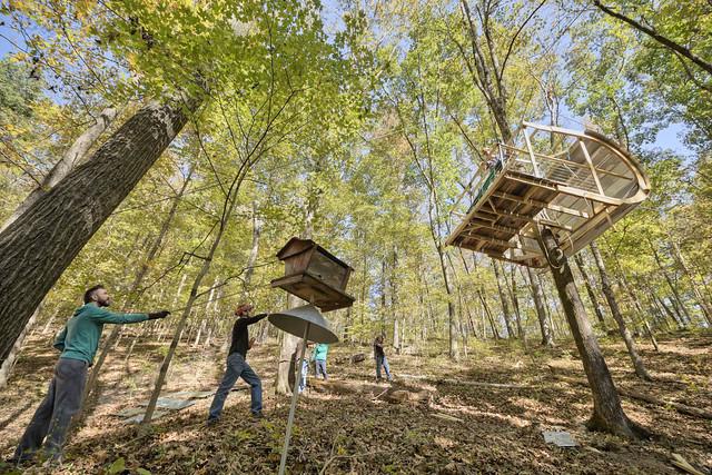 Ewok Tree House, Davidson County, Tennessee 3