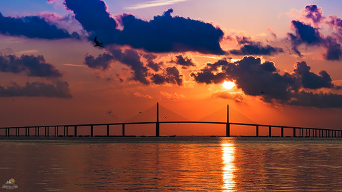 reflection water birds silhouette clouds sunrise landscape tampabay florida sunshineskywaybridge fortdesotopark nikond810