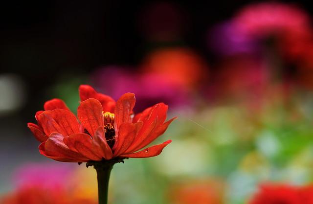 flower 631