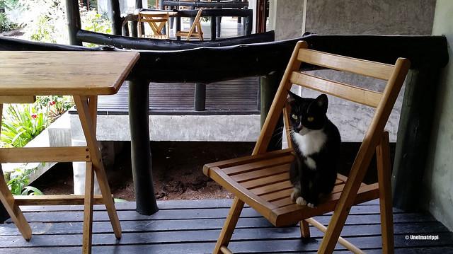 Kissa bungalowin terassilla