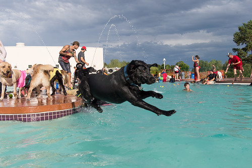 Fort Collins Pooch Plunge | by City of Fort Collins, CO