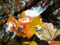 Reflections and fall colors on a rainy day in Hartford, Connecticut, October 28, 2015.