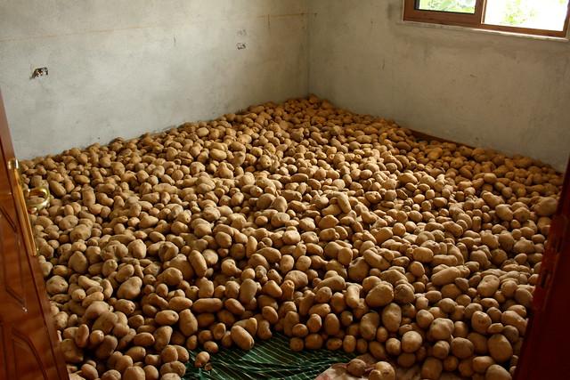 Potatoes...lots of them. - Rural Albania