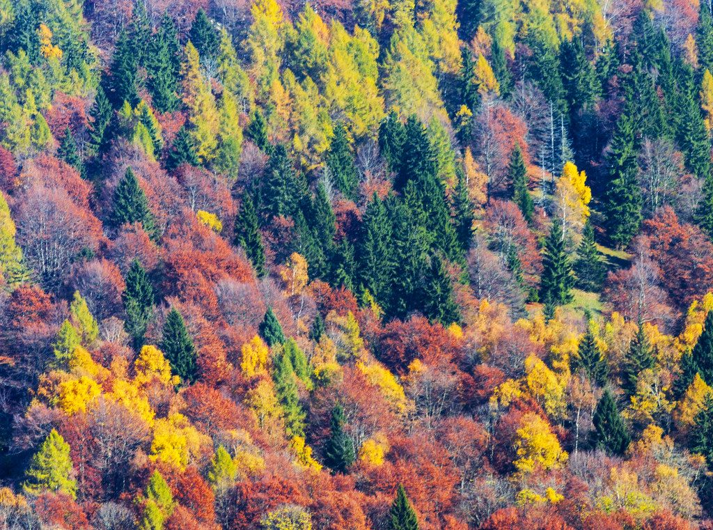 Foliage by forastico