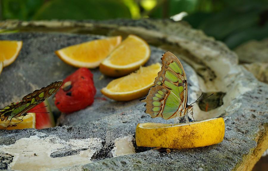 Butterfly Pavillion Xcaret