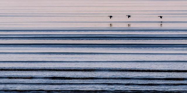 Flight in straight lines