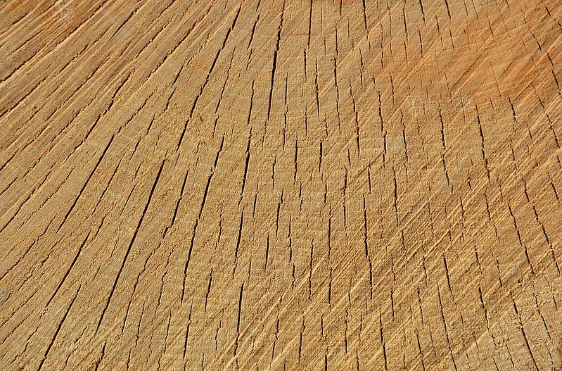Wood Texture #10