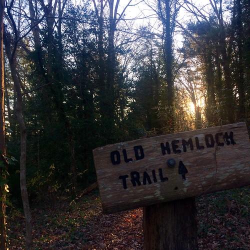 morning trees sun nature sunrise nc woods northcarolina hike swannanoa oldhemlocktrail
