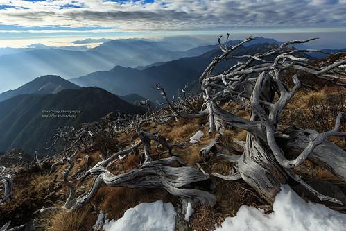 舞。雪山白枯木 Mt.Syue, Taiwan _IMG_3896 | by 阿Len