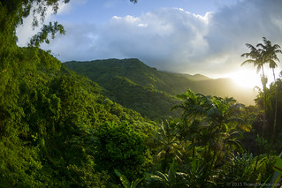 El Yunque National Forest, Puerto Rico   by Thomas Shahan 3