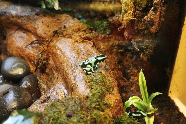 Shedd Aquarium- Amphibians section