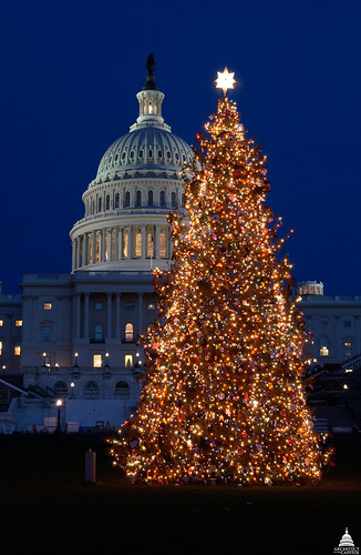 2004 U.S. Capitol Christmas Tree | by USCapitol