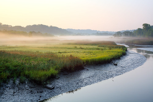 morning trees summer mist newyork nature water fog creek landscape foggy hills queens dew environment grasses serene marsh tranquil saltmarsh waterscape sunsrise