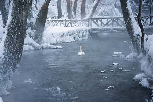 river swan swans bird birds winter ice cold cool snow bridge bridges tree trees dead lonely loneliness sad sadness bosnia sarajevo love lovely beautiful beauty day nature natural landscape landmark landscapes land photography photo animal animals water waterfront morning sun sunshine sunrise sunny suny