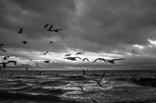 Birds | by Julien.Belli