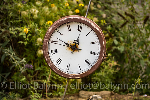 August 16, 2015 - 3 - background, beautiful, botanical, Clock, decoration, design, flora, Flower, Garden, green, Nature, outdoor, park, public, scene, spring, summer, Tree, vintage, white | by elliotbalynn