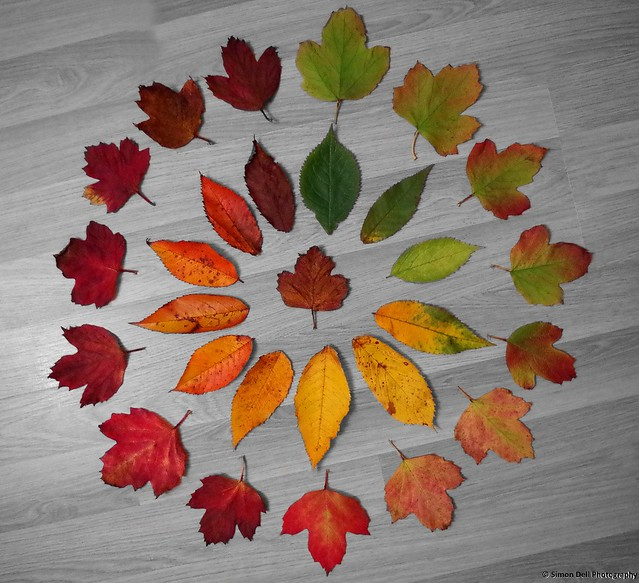 Cycle of Leaf ..