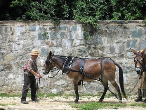 Of Mules and Man | by nedrichards